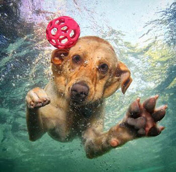 Βγήκαν για ψάρεμα στα ανοιχτά της Μυκόνου και βρήκαν σκύλο να κολυμπάει μόνος του! (vid)